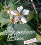 brombeer_bluete