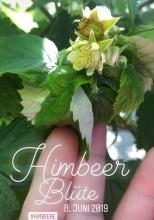 himbeer_bluete