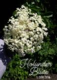 holunder_bluete