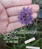 schnittlauch_bluete